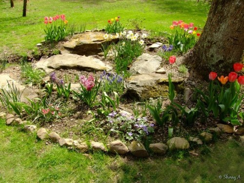 spring bulb bed