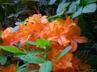 closeup of flower cluster