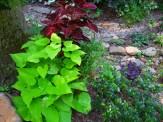 coleus and sweet potato in secret garden