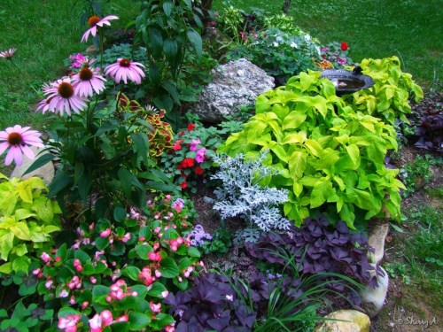 mix of annuals and perennials