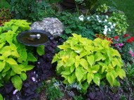 bird bath and coleus in new bed