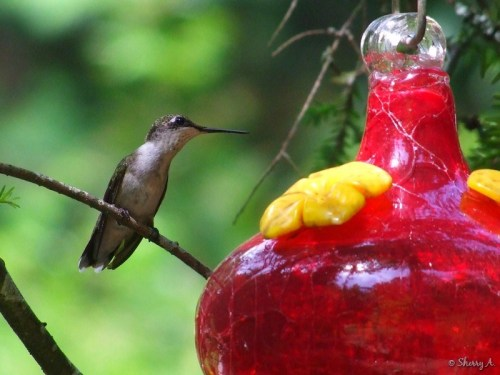 guarding the feeder