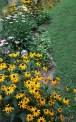 black-eyed susans, coneflowers, shasta daisies