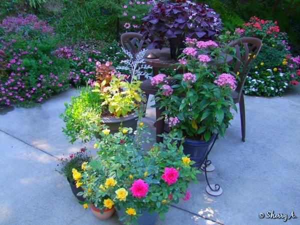 Patio And Late Seaon Containers
