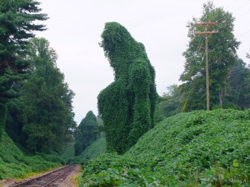 kudzu monsters