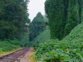 look at the spooky shapes of kudzu
