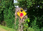 sprayed kudzu on road sign
