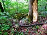 huge moss covered rock