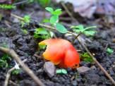 bright red mushroom