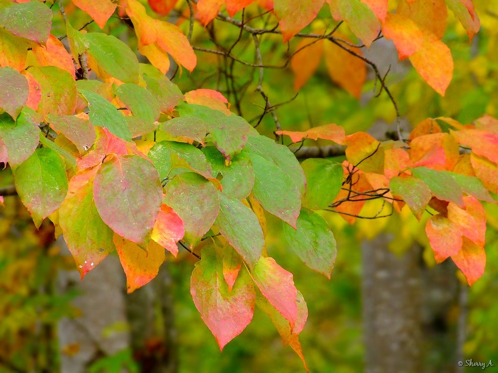 fall leaves | Sherry\'s Place