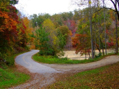 a country road in fall