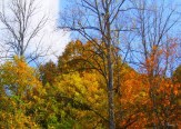 fall color from front yard