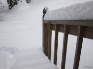 front steps buried in snow