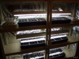 indoor seed starting shelves