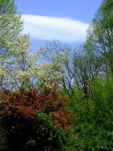 redtip shrub and dogwood