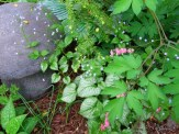 brunnera hosta and bleeding hearts