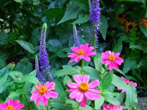 front bed flowers