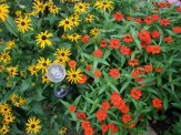 rudbeckia and profusion zinnia