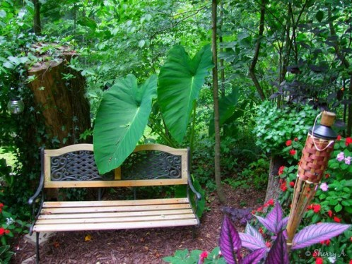 elephant ears near bench in secret garden