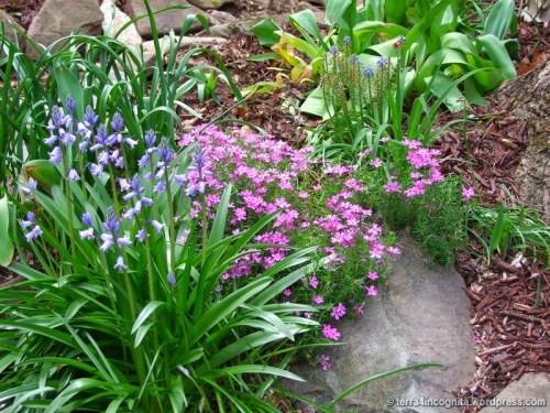 spring bulb flower bed