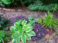 hostas and shamrocks