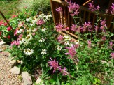 coneflowers and agastache