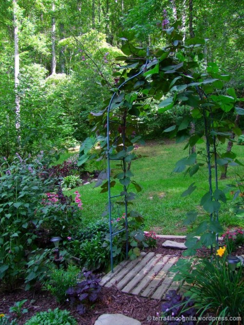 arch with hyacinth bean