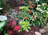 sunpatiens with caladiums and wandering jew