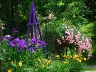 japanese iris and roses