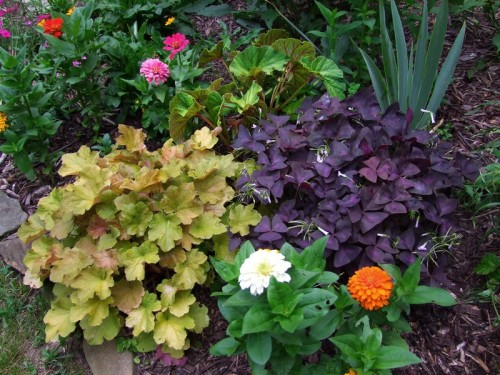 Zinnias, Heuchera, Shamrocks