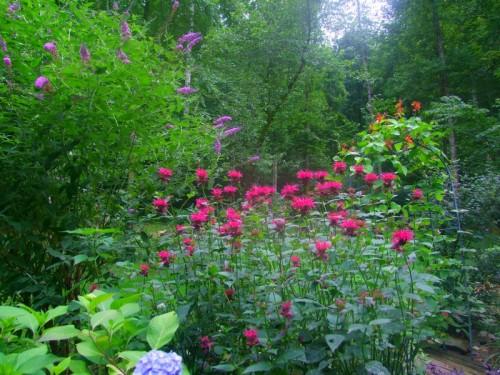 bee balm, butterfly bush, hydrangea