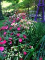 sunpatiens mixed