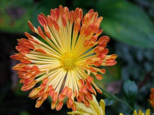 Matchsticks Mum Flower