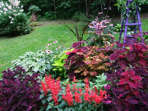 stump bed with coleus, salvia, mixed