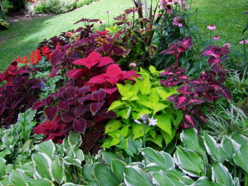 stump bed with coleus