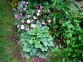 sunpatiens and heuchera