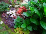 caladium, shamrocks, heuchera, mixed