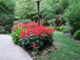 salvia in lamp post bed